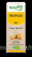 Herbalgem Propolis Large Spectre Solution Buvable Bio Fl Cpte-gttes/15ml à NEUILLY SUR MARNE