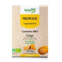 Herbalgem Propolis Large Spectre Gomme Bio B/24 à NEUILLY SUR MARNE